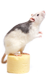 get your mouse moving with Avenue Training